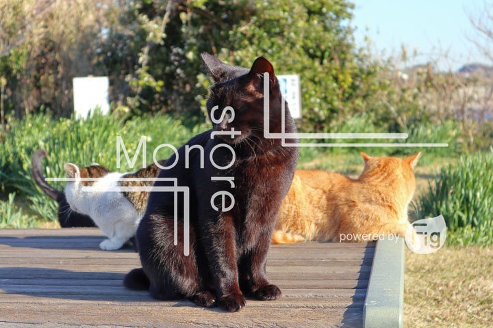 cats_photography3816