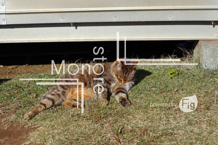 cats_photography3836