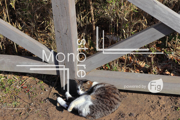 cats_photography3862