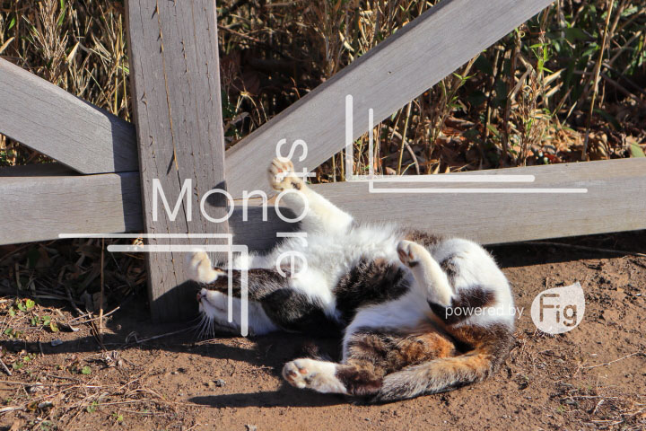 cats_photography3870