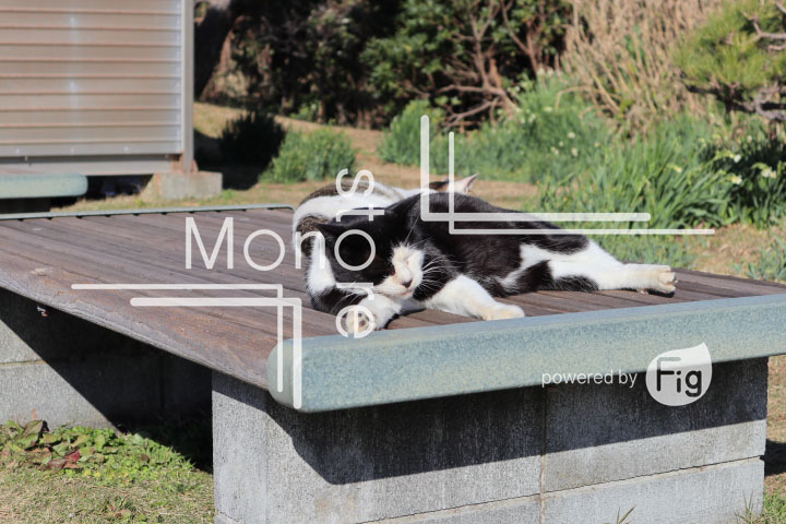 cats_photography4018