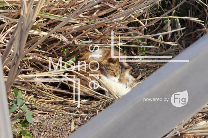 cats_photography4264