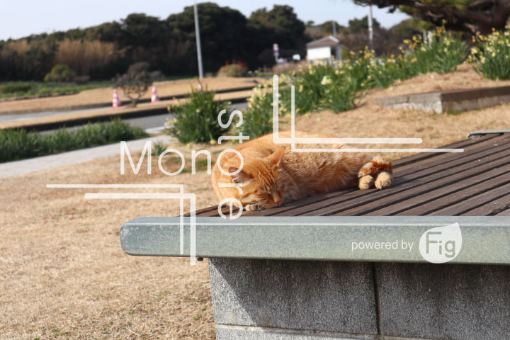 cats_photography4480