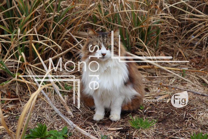 cats_photography4639