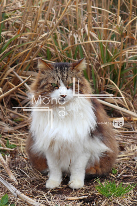 cats_photography4656