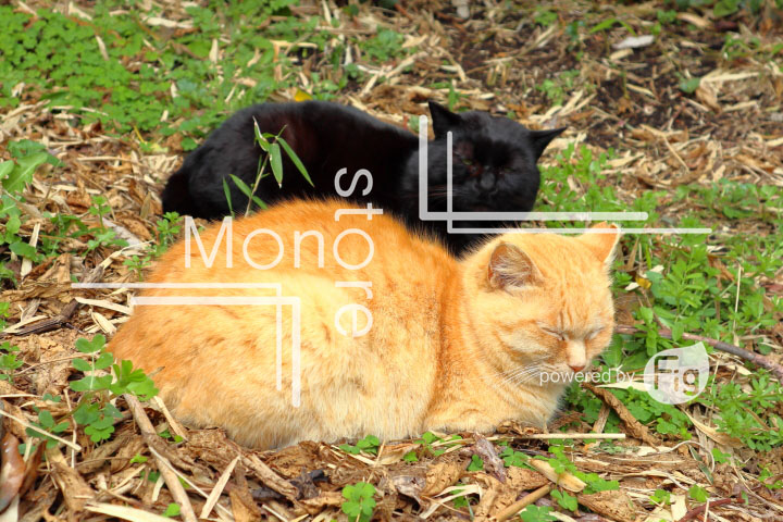 cats_photography4742