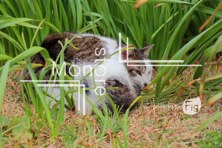 cats_photography4764