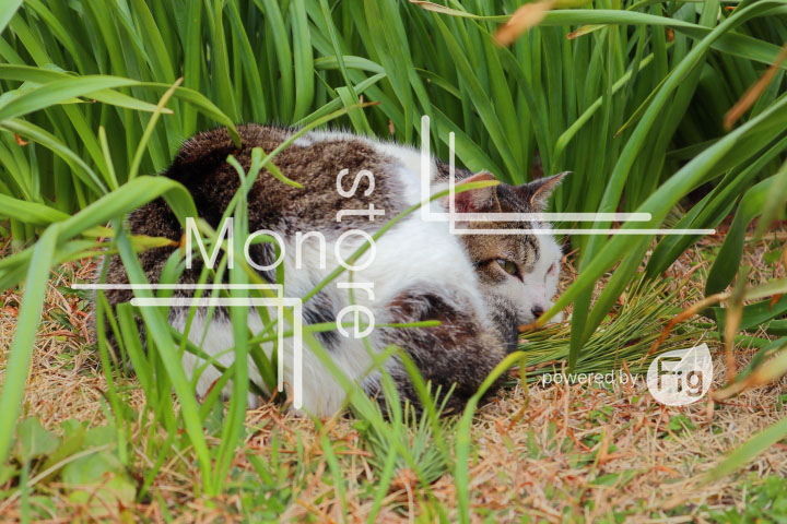 cats_photography4768