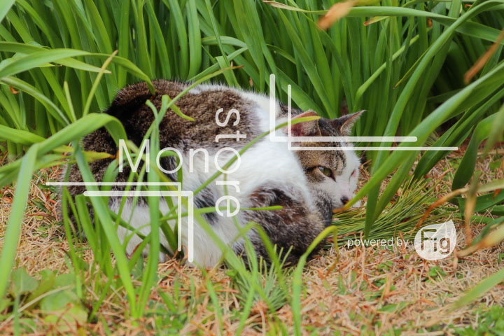 cats_photography4769