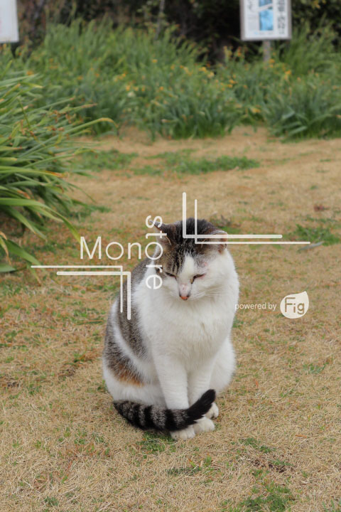 cats_photography4852