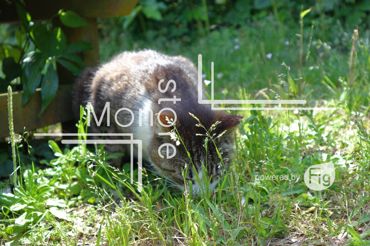 cats_photography5742