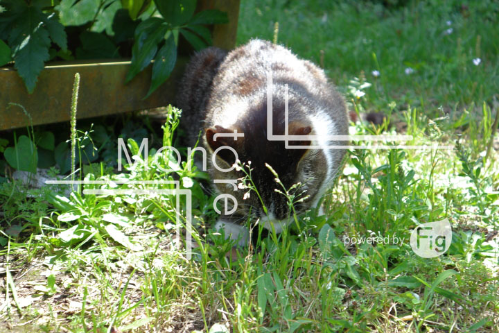 cats_photography5761