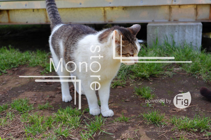 cats_photography5774