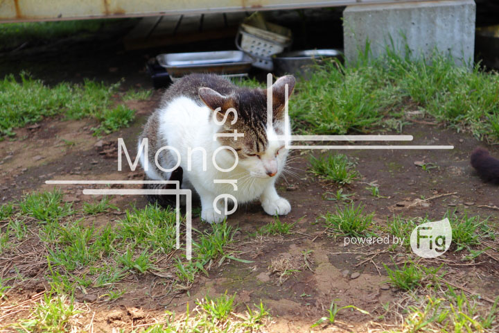 cats_photography5785
