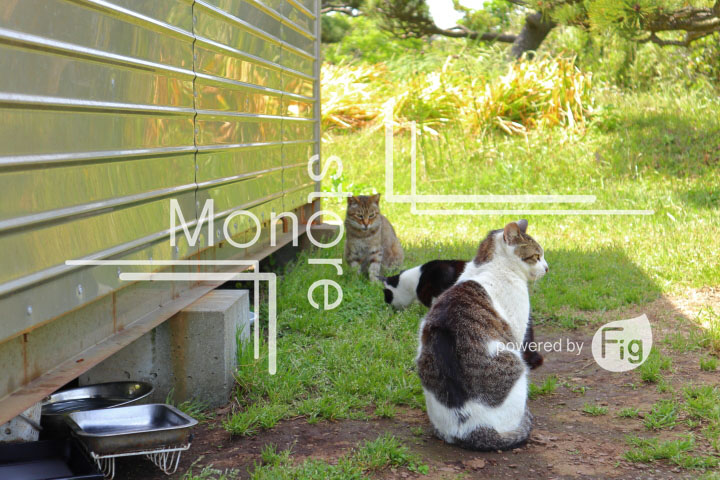 cats_photography5837