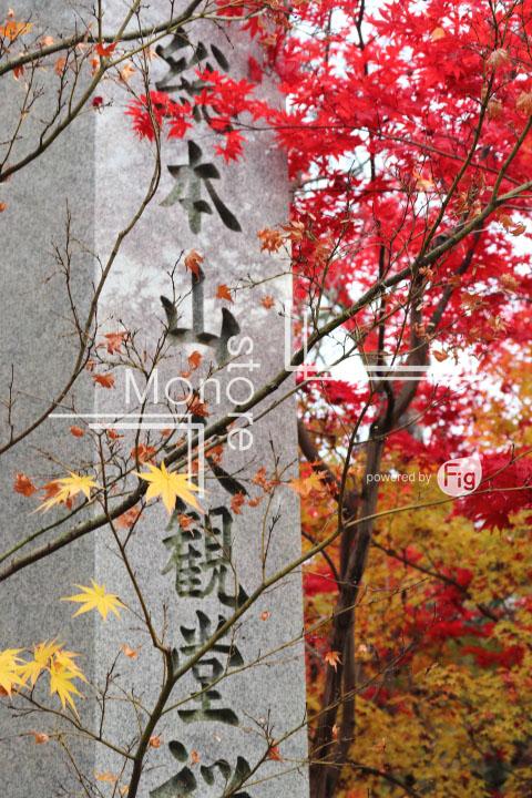 紅葉の写真 Autumn leaves Photography 3240