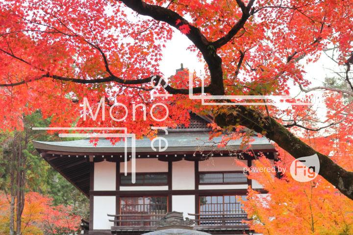 紅葉の写真 Autumn leaves Photography 3243