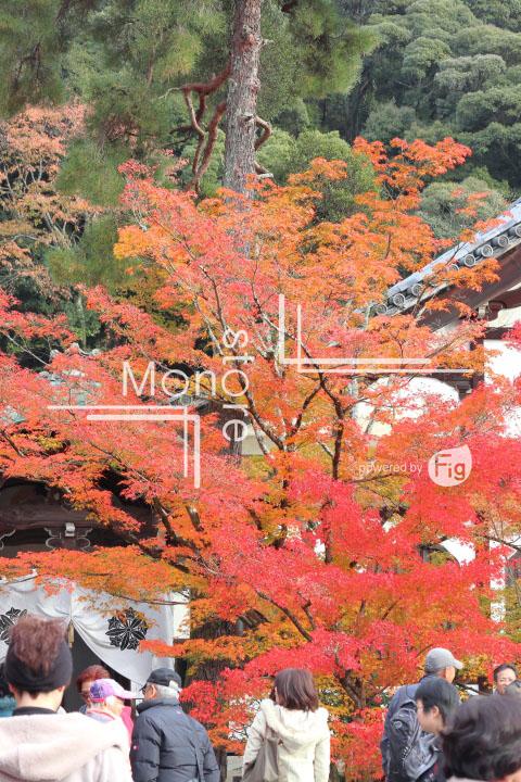 紅葉の写真 Autumn leaves Photography 3254