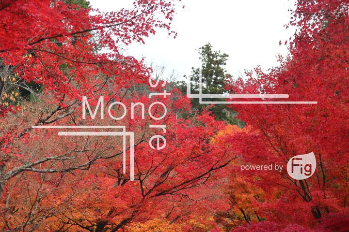 紅葉の写真 Autumn leaves Photography 3261