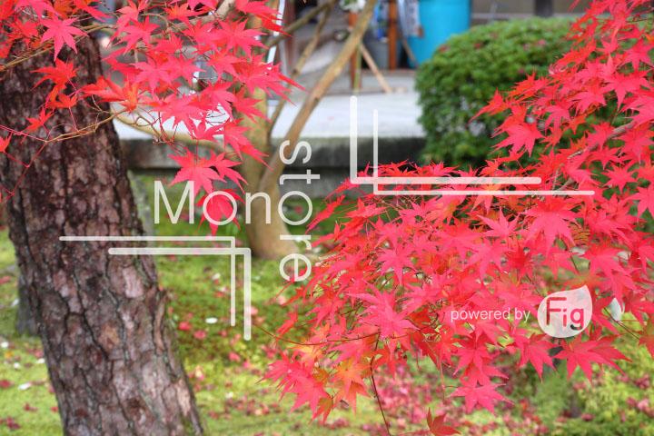 紅葉の写真 Autumn leaves Photography 3262