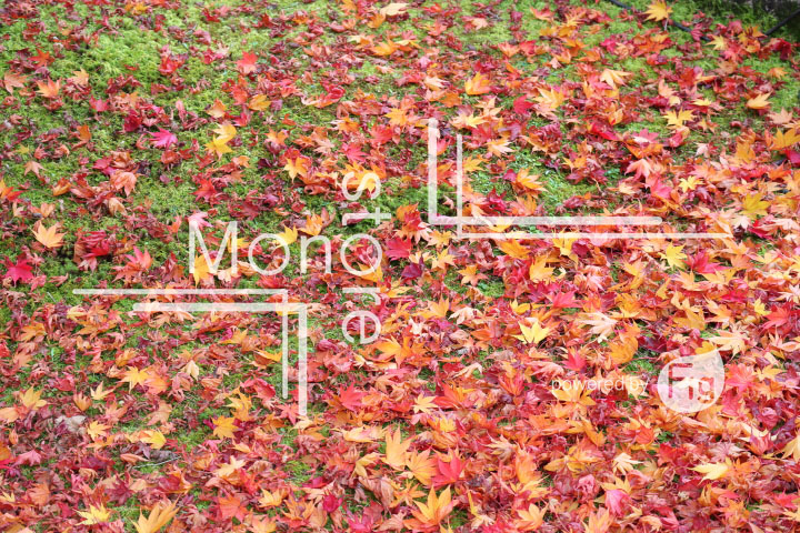 紅葉の写真 Autumn leaves Photography 3269
