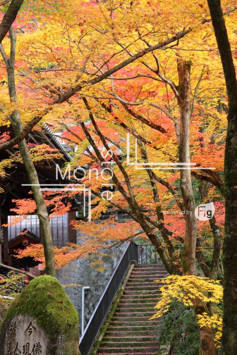 紅葉の写真 Autumn leaves Photography 3274