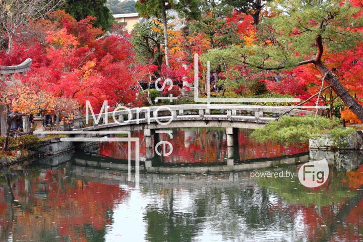 紅葉の写真 Autumn leaves Photography 3282