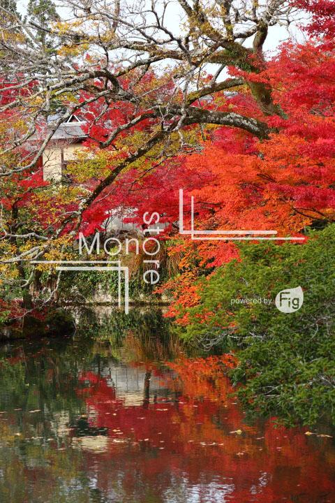 紅葉の写真 Autumn leaves Photography 3285