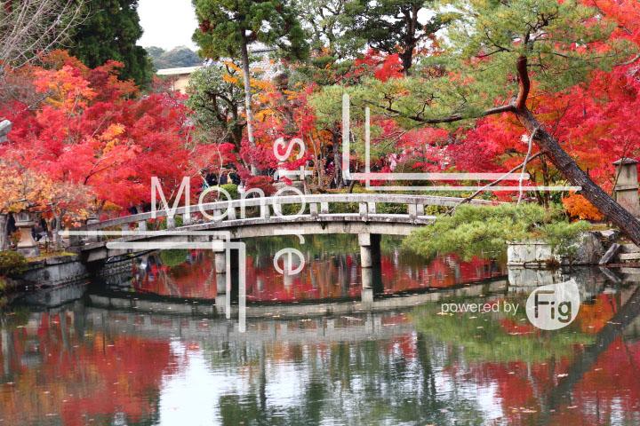 紅葉の写真 Autumn leaves Photography 3287