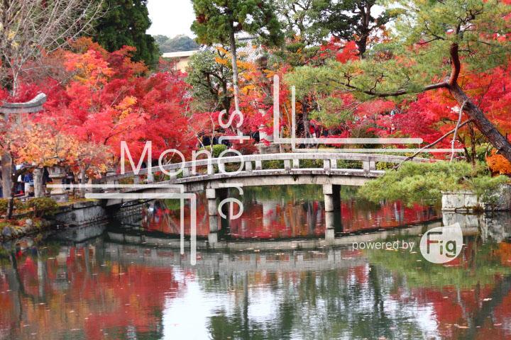 紅葉の写真 Autumn leaves Photography 3288