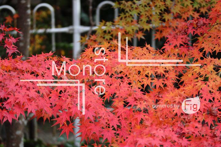 紅葉の写真 Autumn leaves Photography 3292