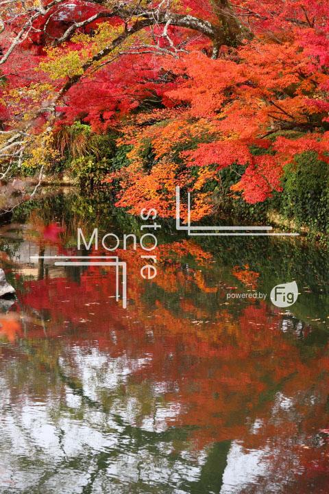紅葉の写真 Autumn leaves Photography 3295