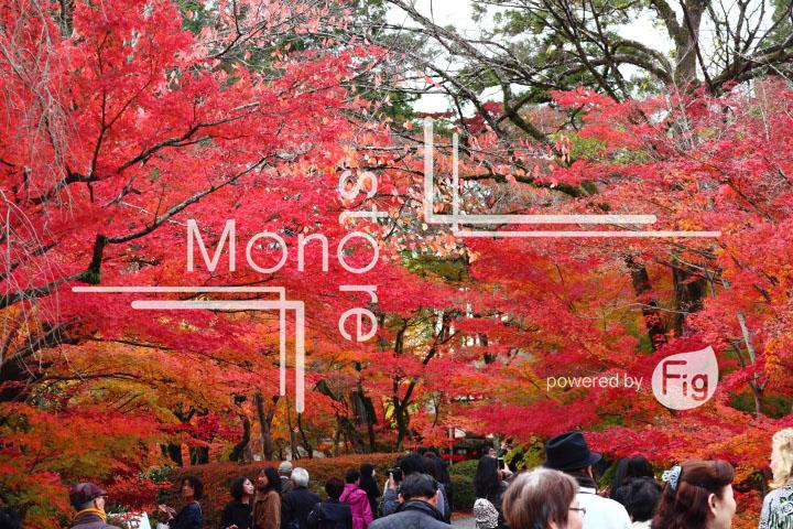 紅葉の写真 Autumn leaves Photography 3296
