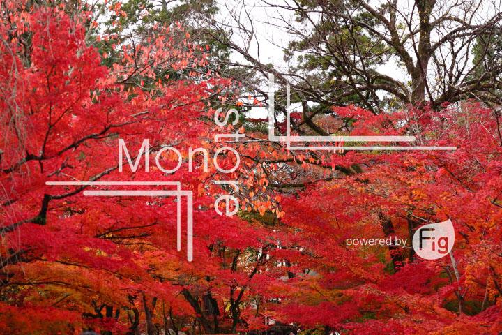 紅葉の写真 Autumn leaves Photography 3297