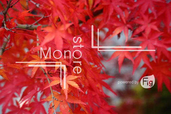 紅葉の写真 Autumn leaves Photography 3303