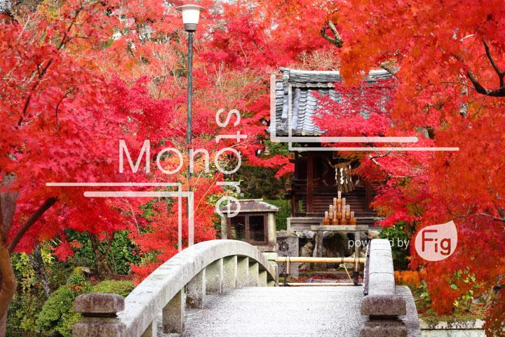 紅葉の写真 Autumn leaves Photography 3304