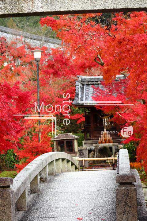 紅葉の写真 Autumn leaves Photography 3306
