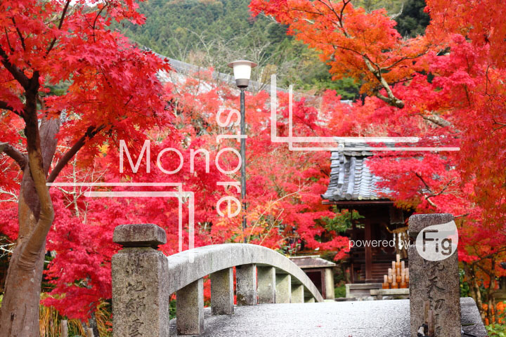 紅葉の写真 Autumn leaves Photography 3309