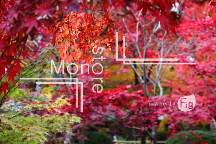 紅葉の写真 Autumn leaves Photography 3311