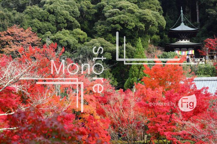 紅葉の写真 Autumn leaves Photography 3315