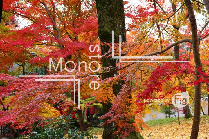 紅葉の写真 Autumn leaves Photography 3322