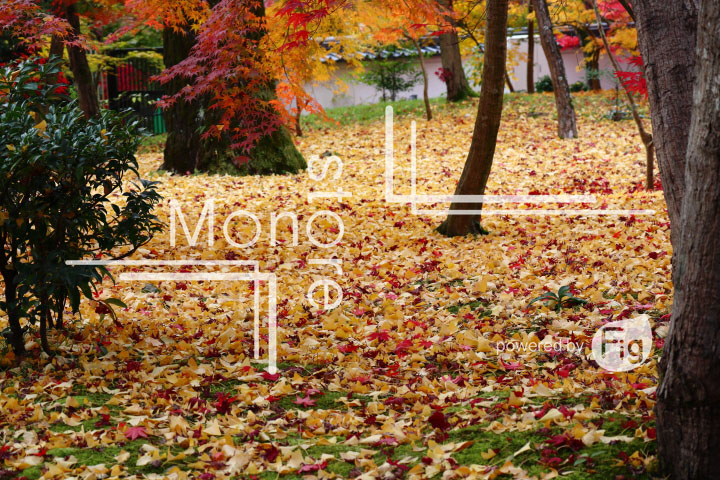 紅葉の写真 Autumn leaves Photography 3323