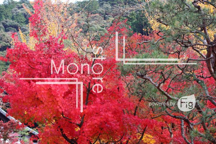 紅葉の写真 Autumn leaves Photography 3334
