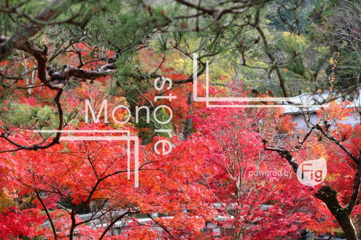 紅葉の写真 Autumn leaves Photography 3335