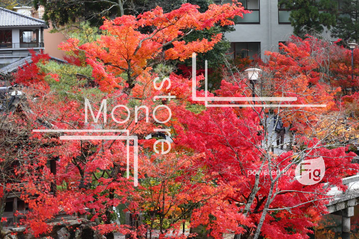紅葉の写真 Autumn leaves Photography 3349