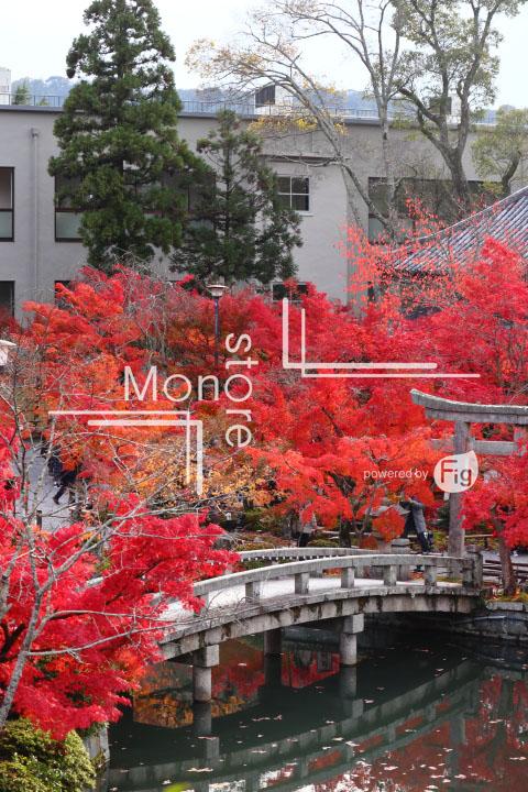 紅葉の写真 Autumn leaves Photography 3350