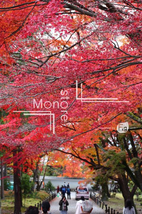 紅葉の写真 Autumn leaves Photography 3357