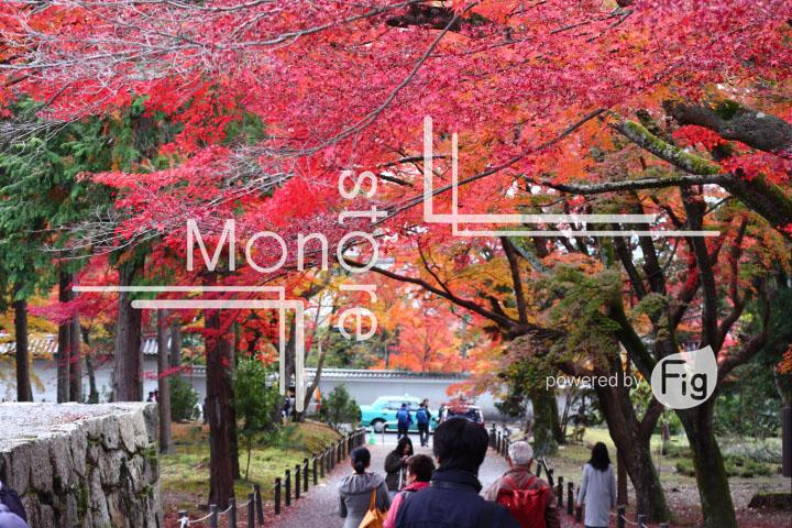 紅葉の写真 Autumn leaves Photography 3359