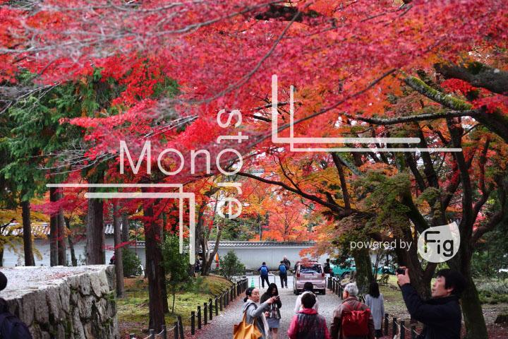 紅葉の写真 Autumn leaves Photography 3360