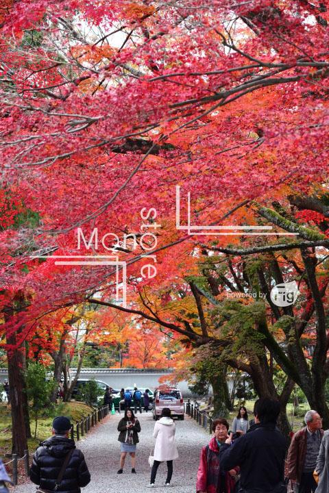 紅葉の写真 Autumn leaves Photography 3364